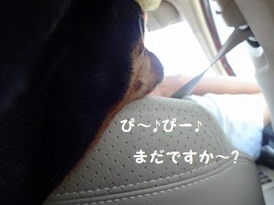 s-河内風穴 (1)