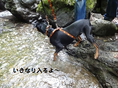 s-河内風穴 (20)
