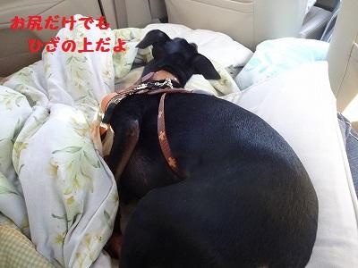 s-河内風穴 (42)