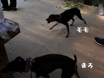 s-兵庫1 (10)