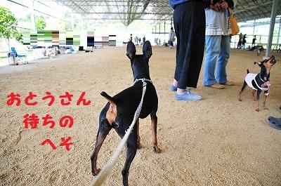 兵庫3 (7)
