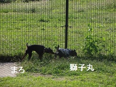 兵庫4 (19)