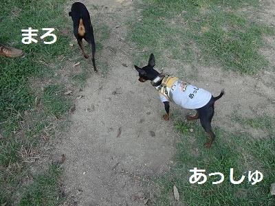 兵庫4 (20)