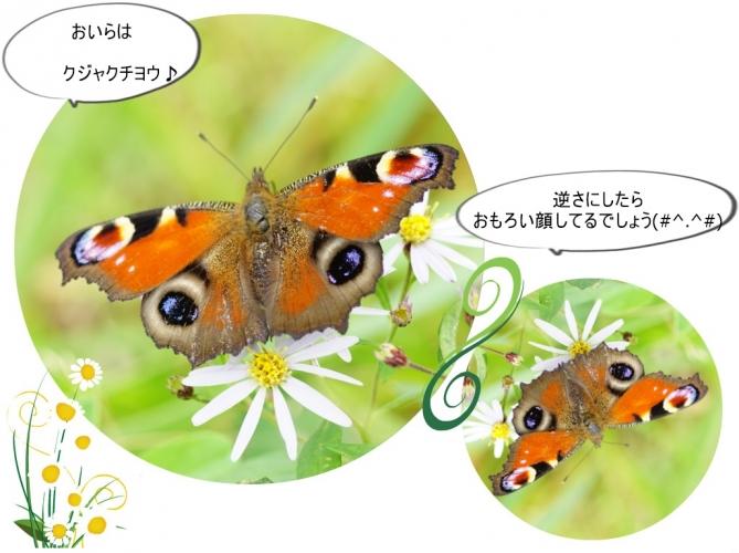 蝶コラージュ