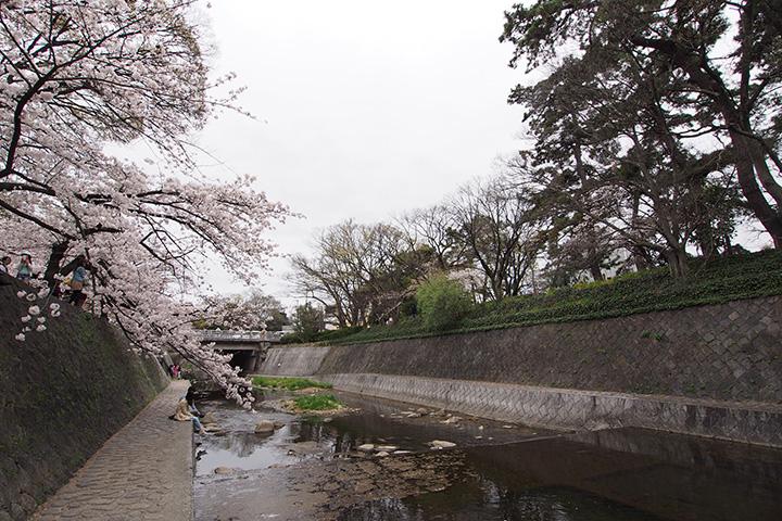 20160403_shukugawa_park-02.jpg