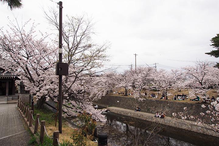 20160403_shukugawa_park-03.jpg
