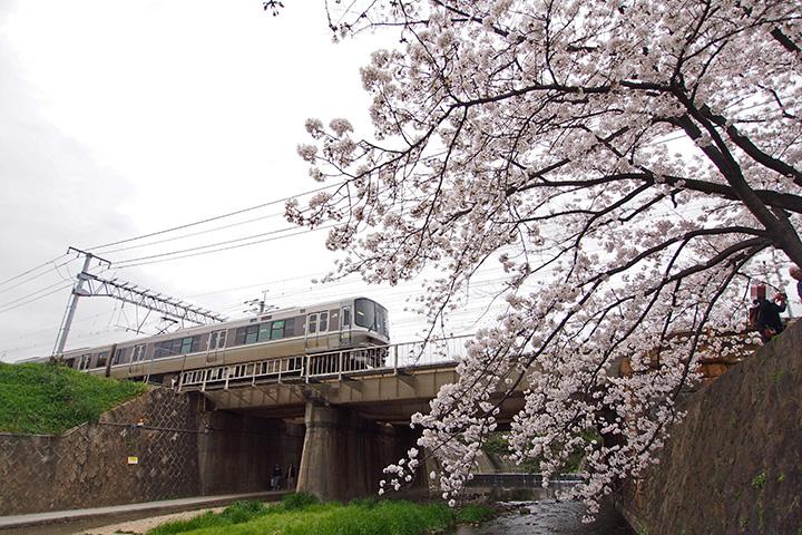 20160403_shukugawa_park-04.jpg