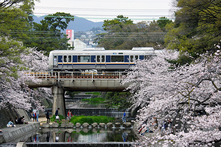 20160403_shukugawa_park-06.jpg