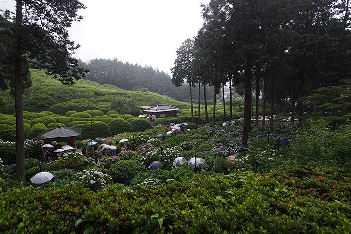 20160619_mimurodoji_temple-01.jpg