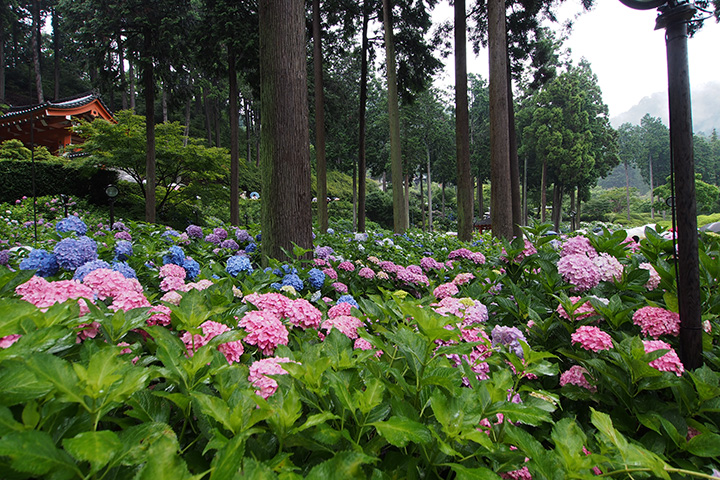 20160619_mimurodoji_temple-02.jpg