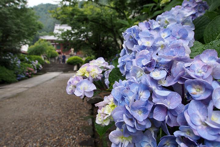 20160619_yatadera_temple-04.jpg