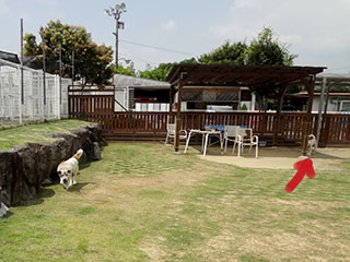 DSC01553.jpg