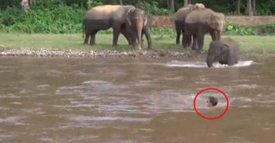 【スゴイ!】溺れてる!と勘違いしたゾウが助けに来た!