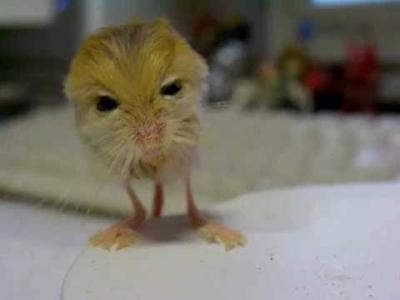 【衝撃!】なんだこの動物!?ネズミ?なに?