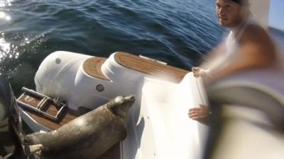 【危機一髪!】アザラシがボートに飛び乗った!その理由は?