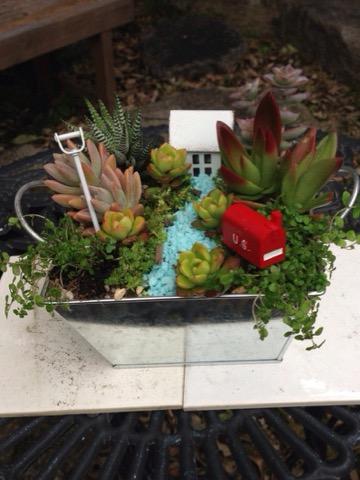 多肉植物の箱庭