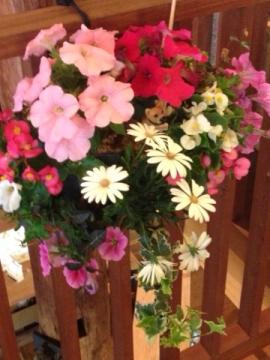 季節の寄せ植え作品 春