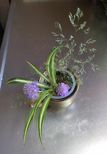 夏 庭の花々 (2)