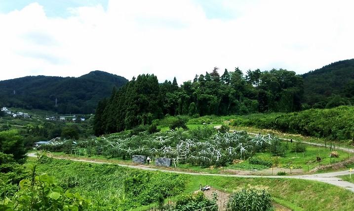 りんご畑 (1)