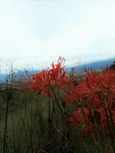 秋の庭の日々 (4)