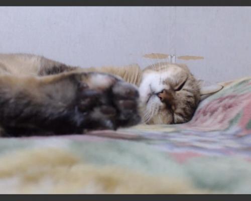 熟睡zzz
