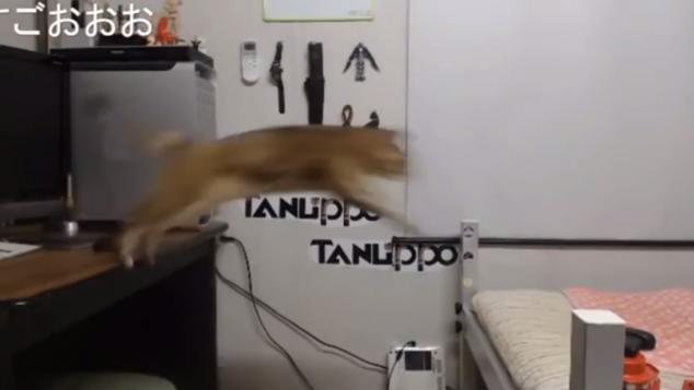 ジャンプ!!⑤