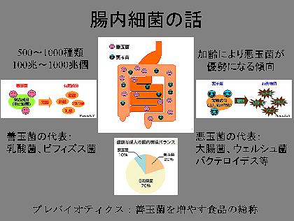腸内細菌の話図2