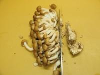 砂肝とキノコの高菜炒め05