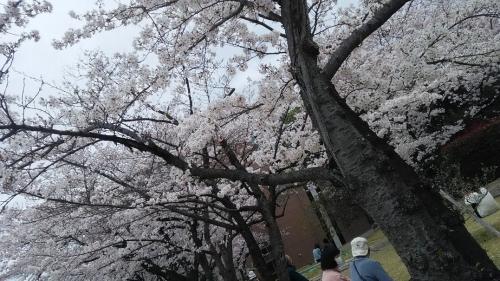 16-04-03_04.jpg
