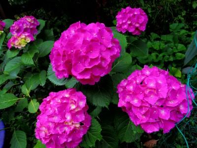 IMGP4426.jpg