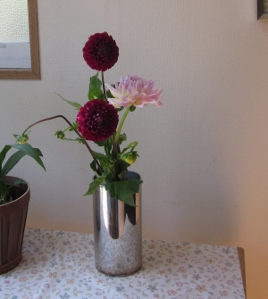ダリアの花