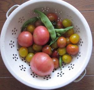 本日の収穫