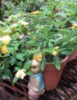 雨の日の庭