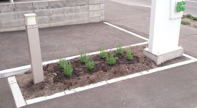 plant00.jpg