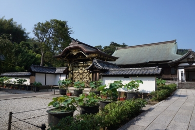 20150731鎌倉_06 - 12