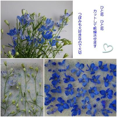9がつ floweratrelierf2