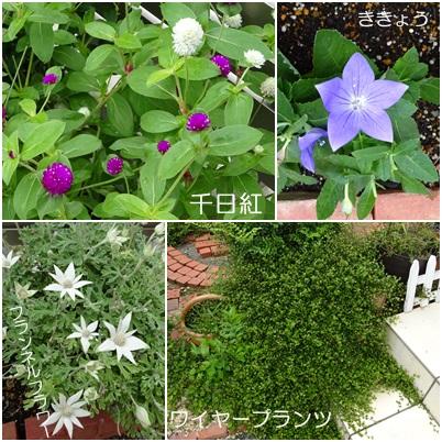 9がつ floweratrelierf1