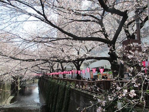 目黒川160331p3