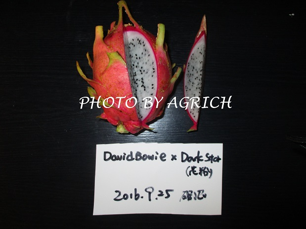 DBDS2-2
