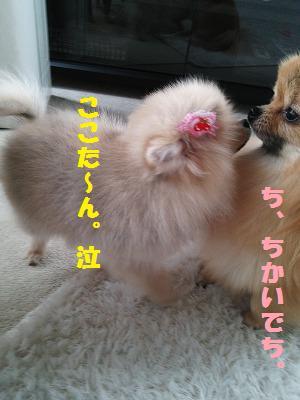 DSC_0131_20160504124529a8a.jpg