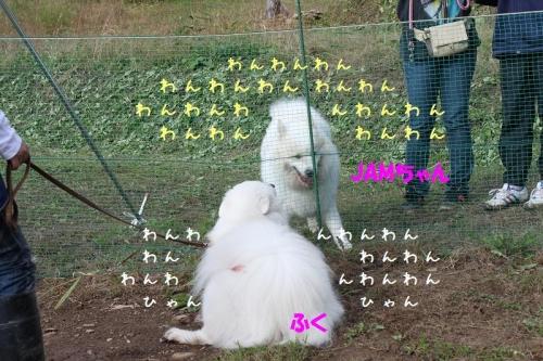 blog_import_5332c17d1a95a_2016092820344284e.jpg