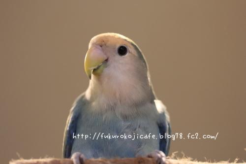 ブルーちゃん1