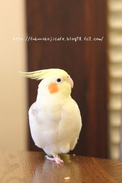 ぷーちゃん1