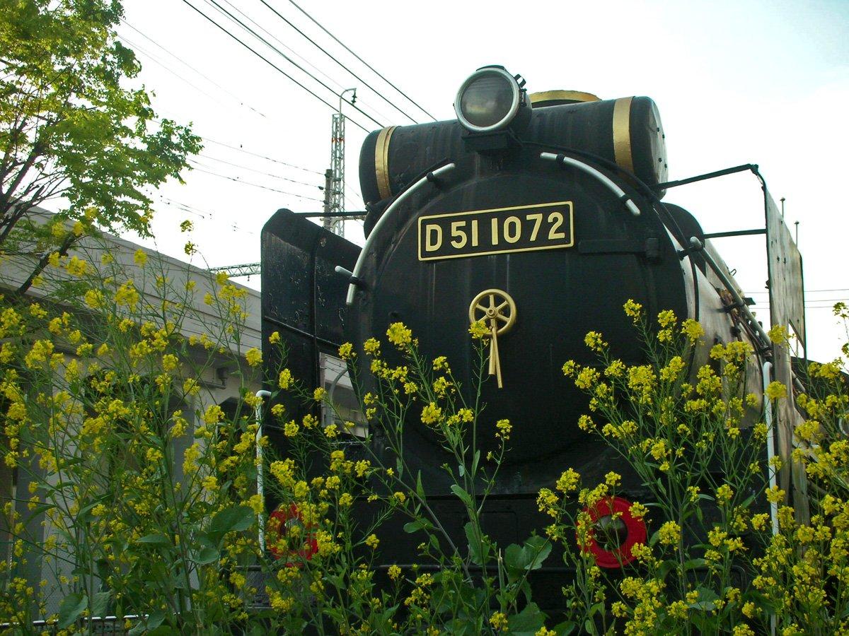 菜の花とD51
