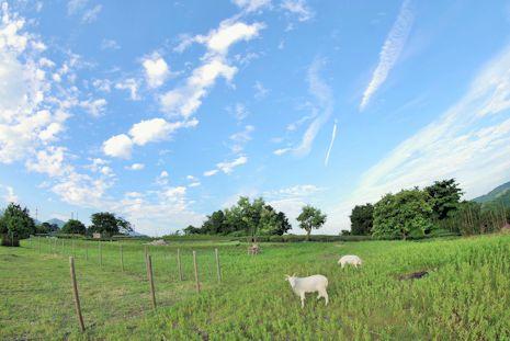 フィッシュアイで見た畑