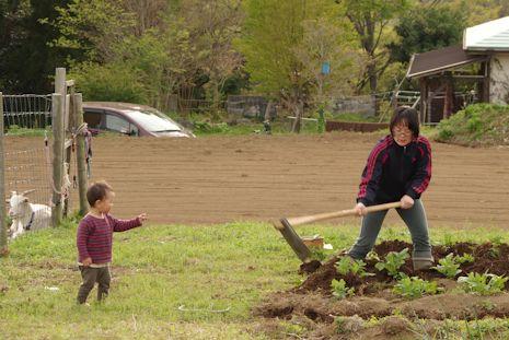 ジャガイモ畑を耕す