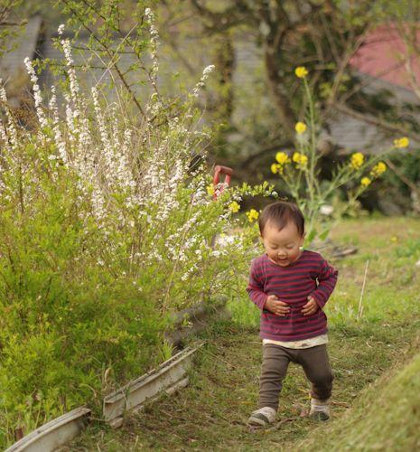 畦を走るミチくん