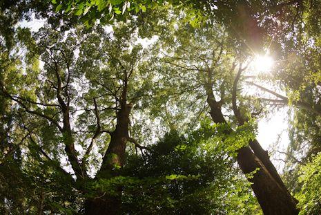 真鶴のお林