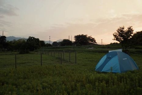 朝焼けの畑テント