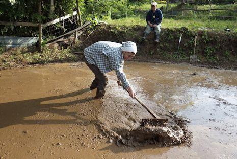 泥まみれの代掻き